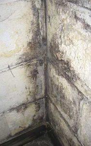 schimmel verwijderen betonnen muur