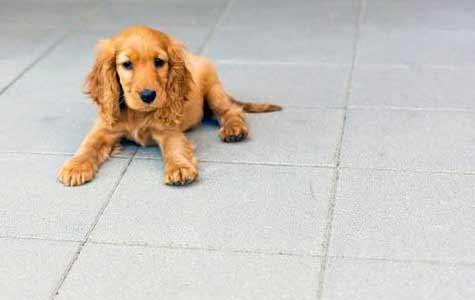 Beton schoonmaken urinevlekken, urinevlekken ebton, beton urinevlekken reinigen, urine reinigen beton, dieren plas beton, plas hond beton schoonmaken